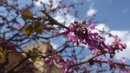 Spain, Rick Steves, guidebook research, Granada